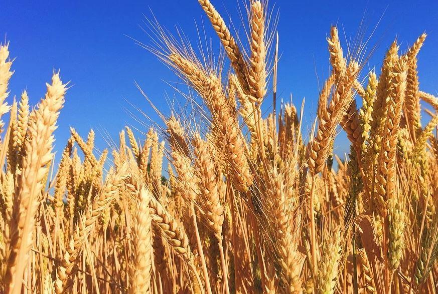 Через Новороссийск идут растущие отгрузки экспортного российского зерна