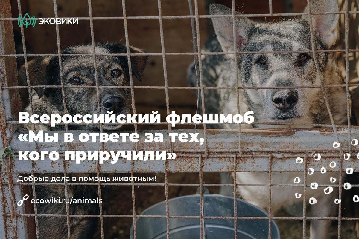 Новороссийцев научат правильно заботиться о бездомных животных