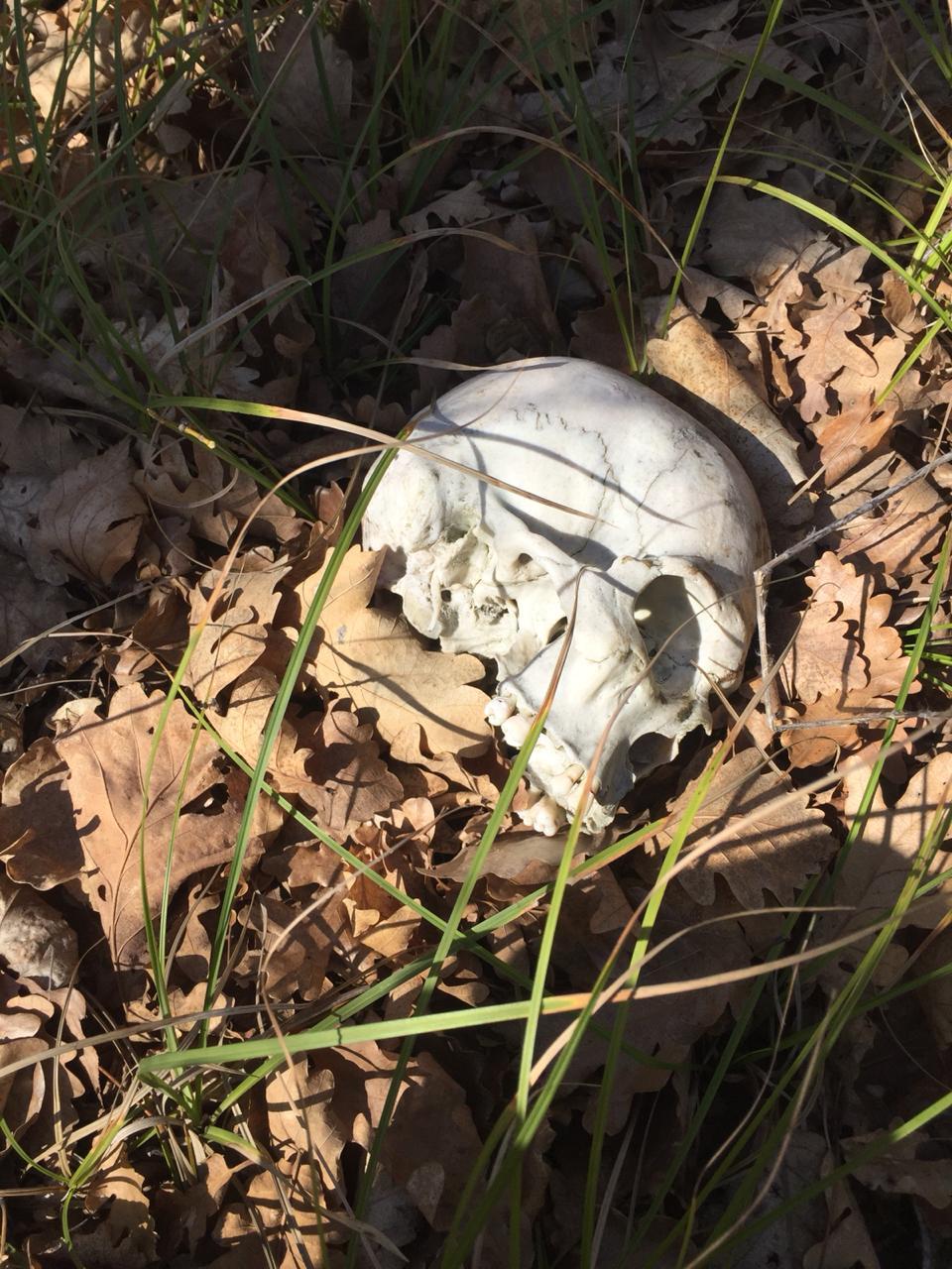 ВНовороссийске влесу нашли скелет человека, который исчез два года назад
