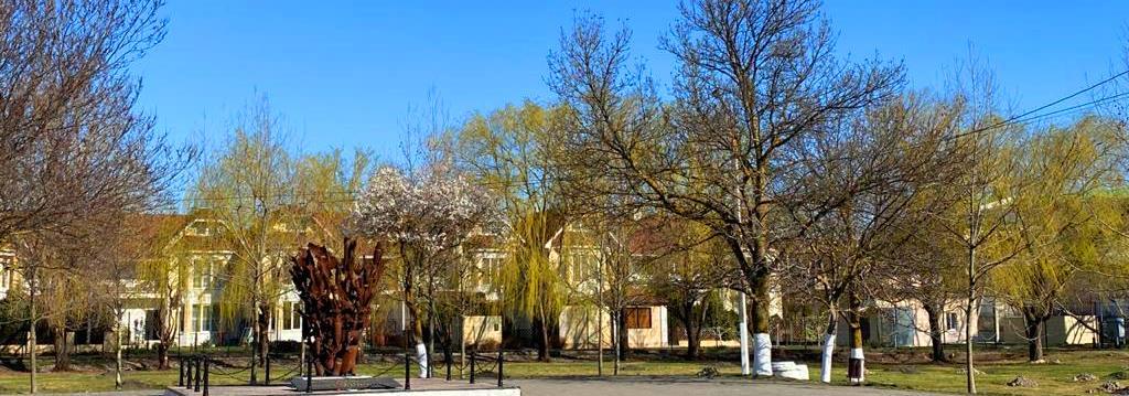 «Сад Памяти» в Новороссийске: посади свое дерево в память о погибших в Великой Отечественной войне