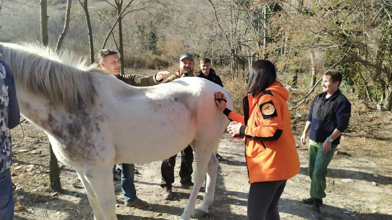 Создано конное направление поиска пропавших людей: новороссийцы проходят обучение