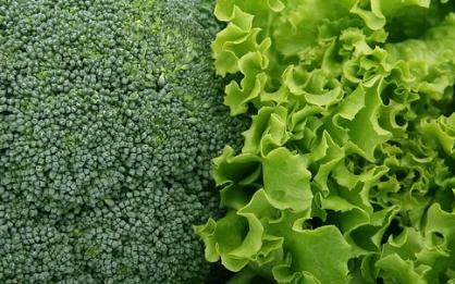 Советы эпидемиолога и агронома: что полезнее выращивать на своем огороде