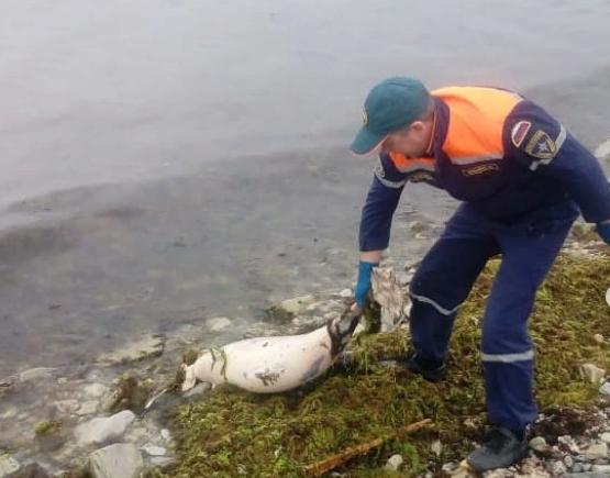 На берегу моря вокруг Новороссийска снова находят мертвых дельфинов: естественный падеж?