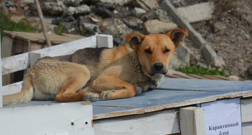 В Новороссийске хотят открыть дом для бездомных животных и приглашают к сотрудничеству