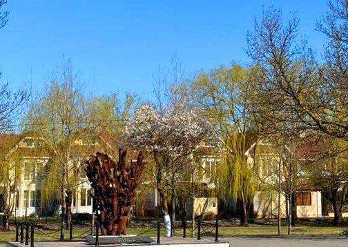 В «Садах памяти» на Кубани зазеленело 70 тысяч деревьев