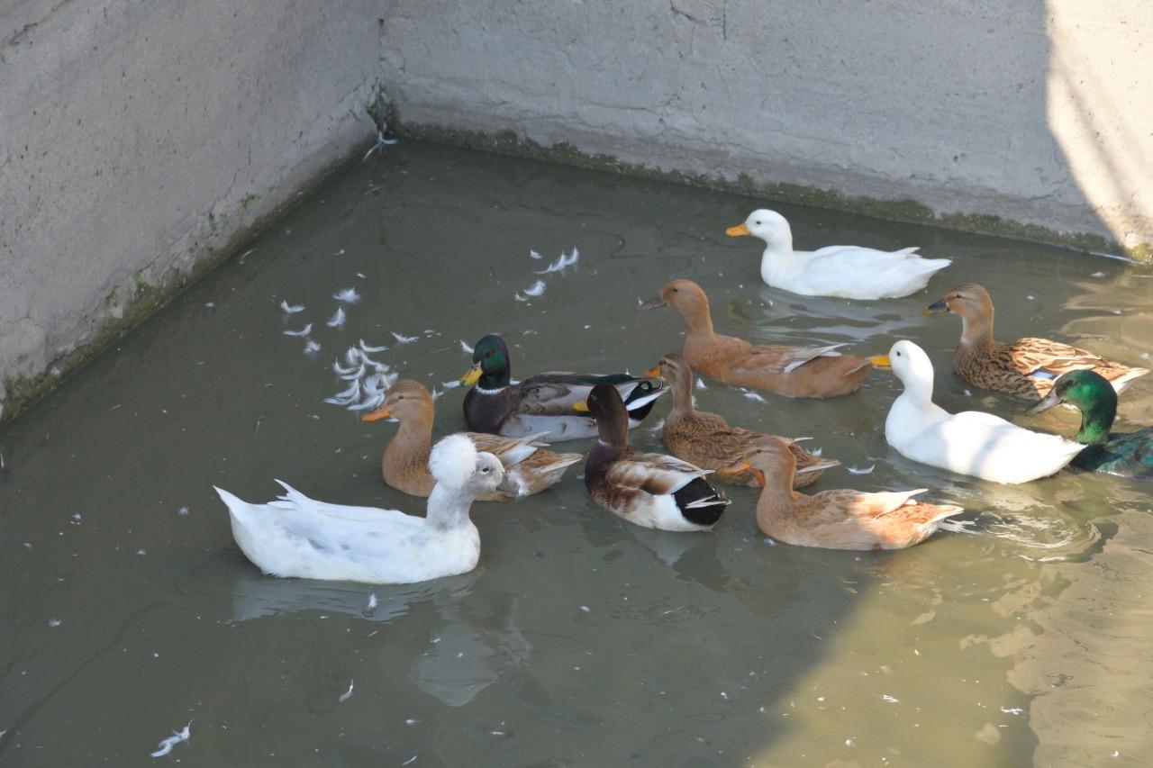 Под Новороссийском из «Парка птиц» пернатых выпустили на волю