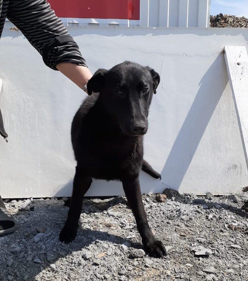 Кто и зачем отстреливает в Новороссийске бродячих собак?