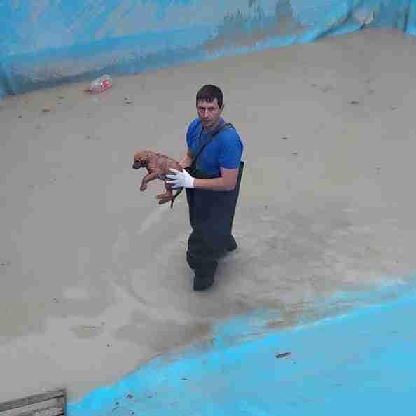 В Новороссийске спасли мохнатого «ребенка», который провалился в бассейн с водой