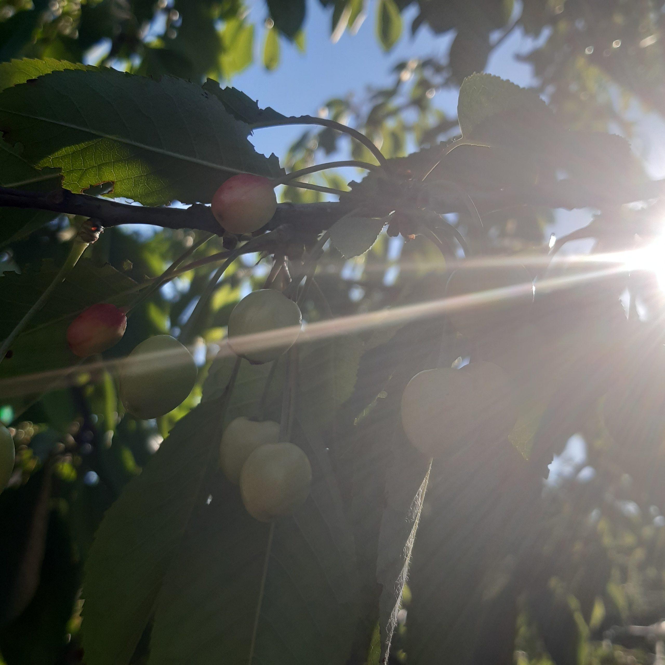 Снег за неделю до лета Новороссийску не грозит, а вот урожая можем не досчитаться