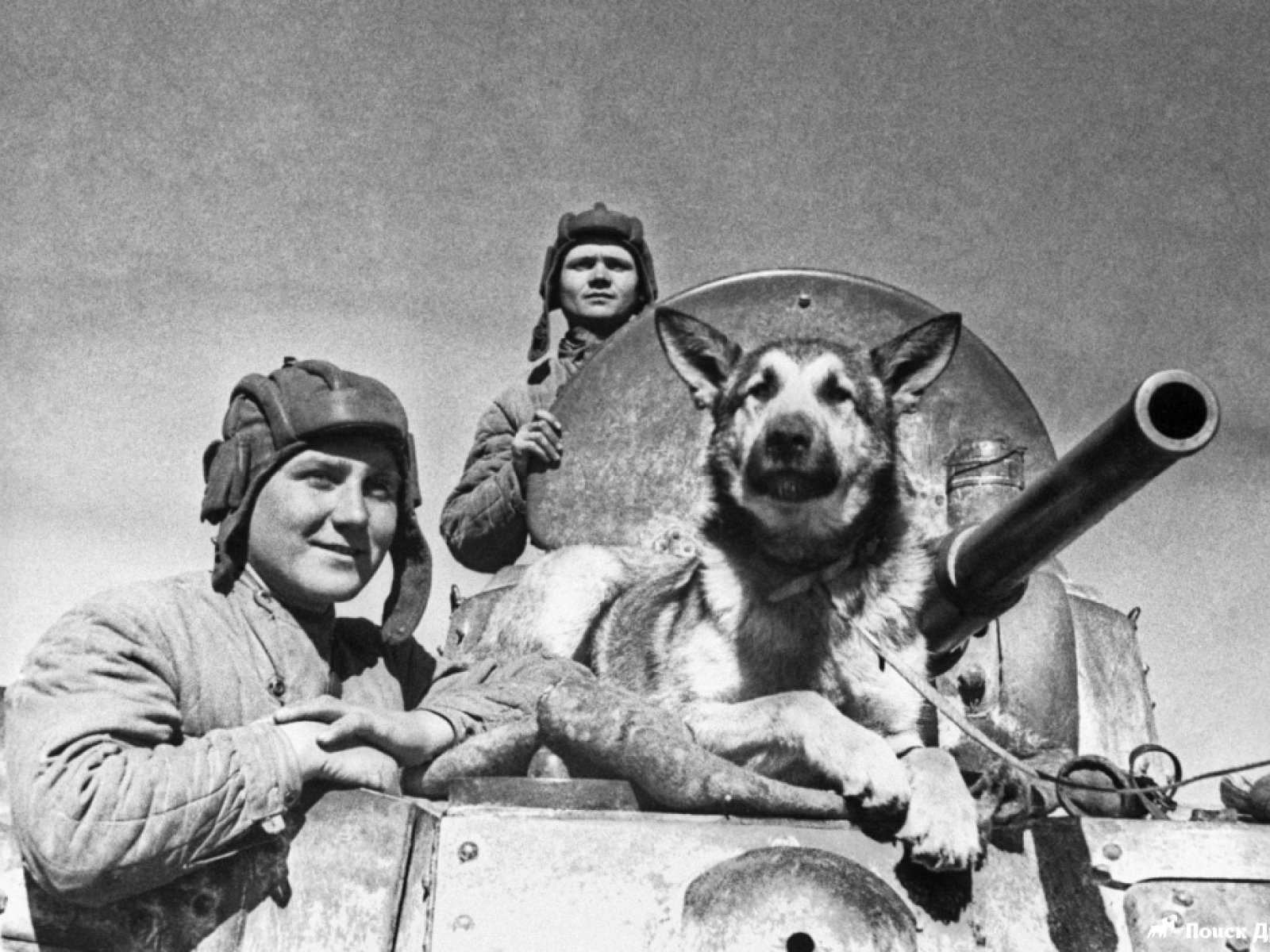 Новороссийские волонтеры вспомнили о животных, которые в годы войны помогали выжить людям