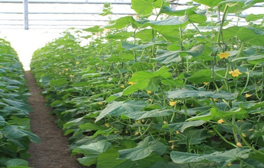 Три миллиона рублей отдадут сельхозпроизводителям Новороссийска