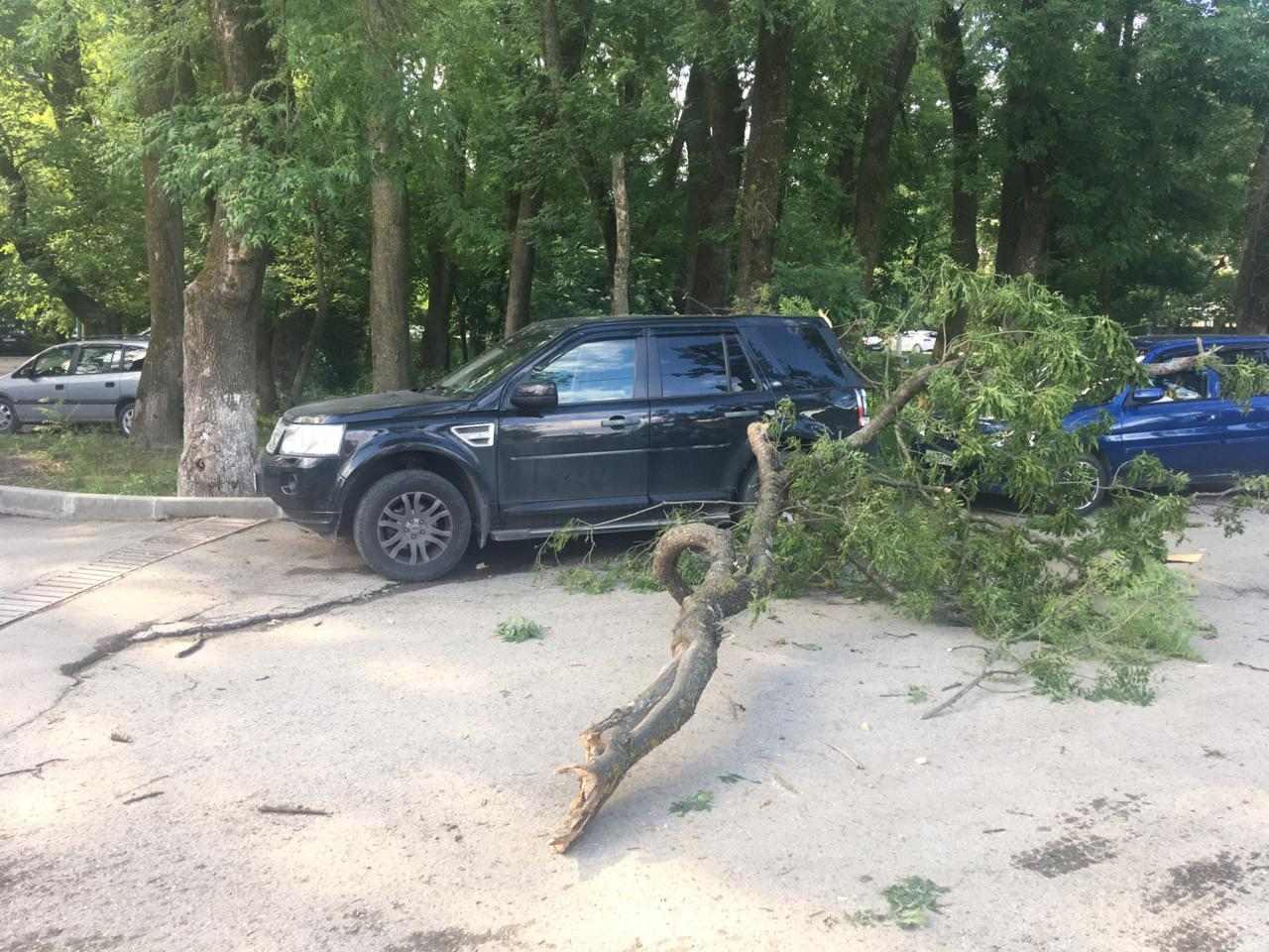 В Новороссийске на припаркованный Land Rover упало дерево