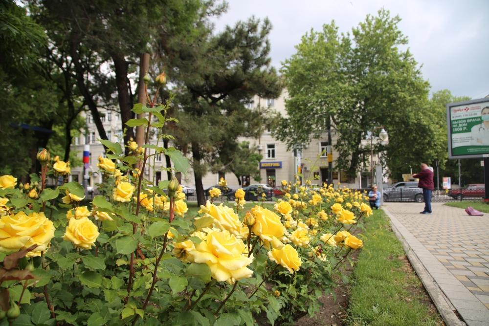 В Новороссийске цветут маки и городские клумбы