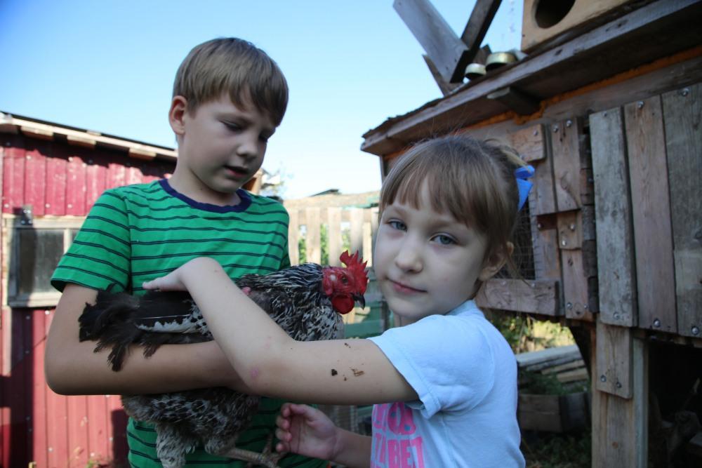 Впервые за много лет жители Новороссийска записываются в очередь на цыплят бройлеров