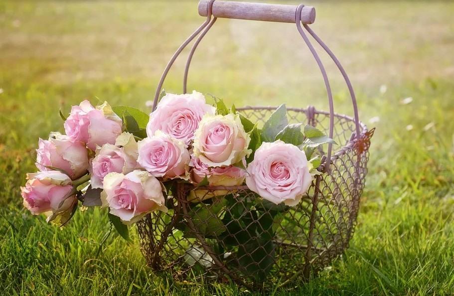 Новороссийск всегда славился розами, но к этим цветам нужен подход