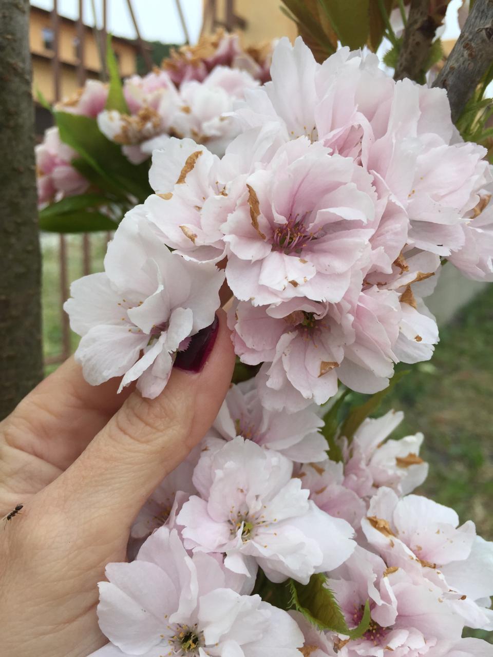 В Новороссийске – яблони в цвету! И не только
