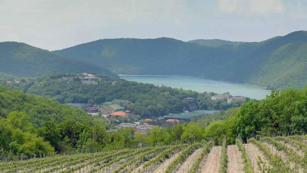 Компания «Абрау-Дюрсо» на 80 процентов обеспечила себя собственным виноградом