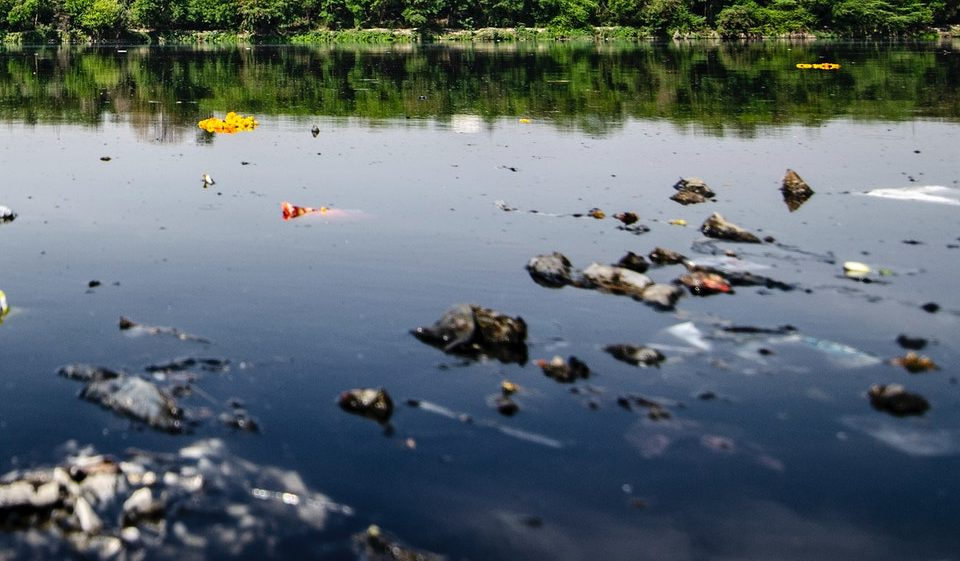 В самом центре Новороссийска у берега плавает мусор