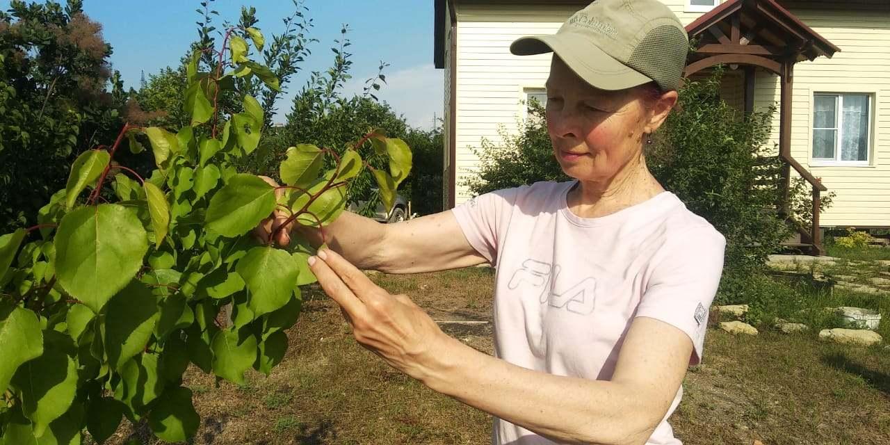 Лечим плодовые деревья. Руководство к действию
