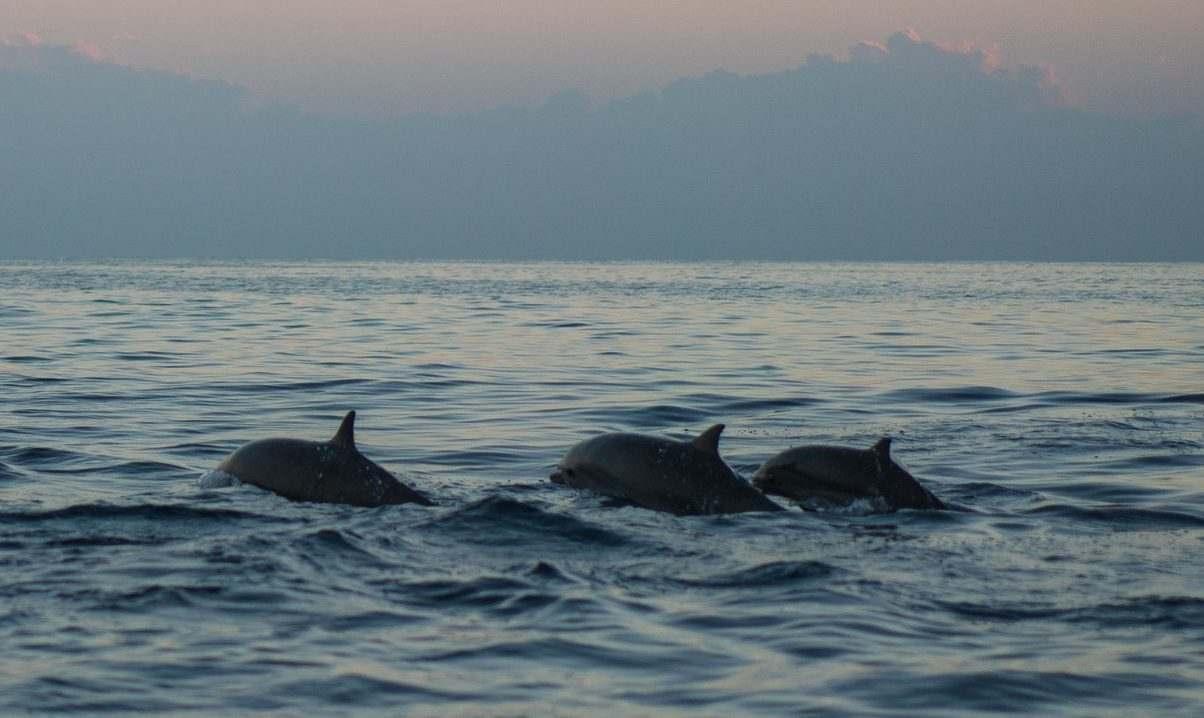 Под Новороссийском находят трупы дельфинов