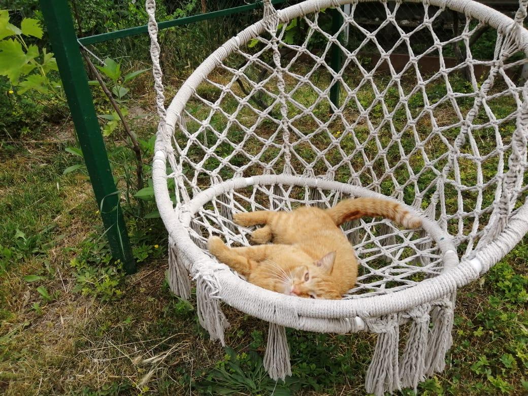 Новороссийским котам после снятия ограничений тоже не сидится  дома