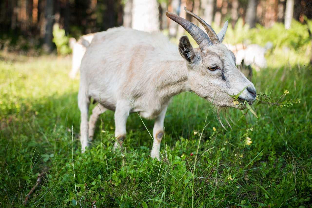 Новороссийск начинает заниматься животноводством в промышленных масштабах.