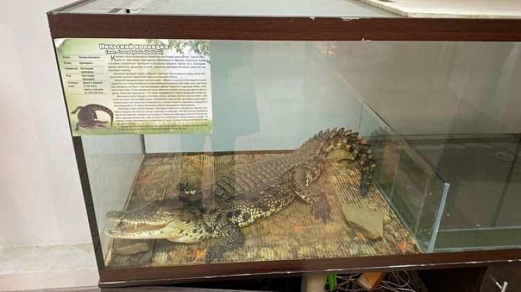 Владельца незаконной выставки животных в Новороссийске оштрафовали на 15 тысяч рублей