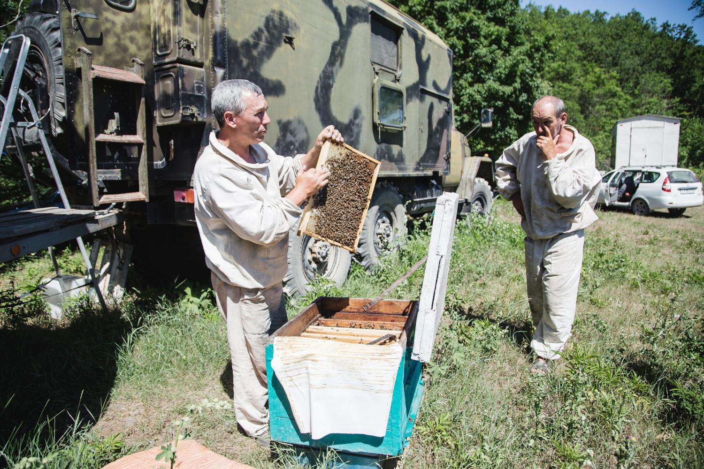 Под Новороссийском пчеловоды скупают земли и создают экодеревню