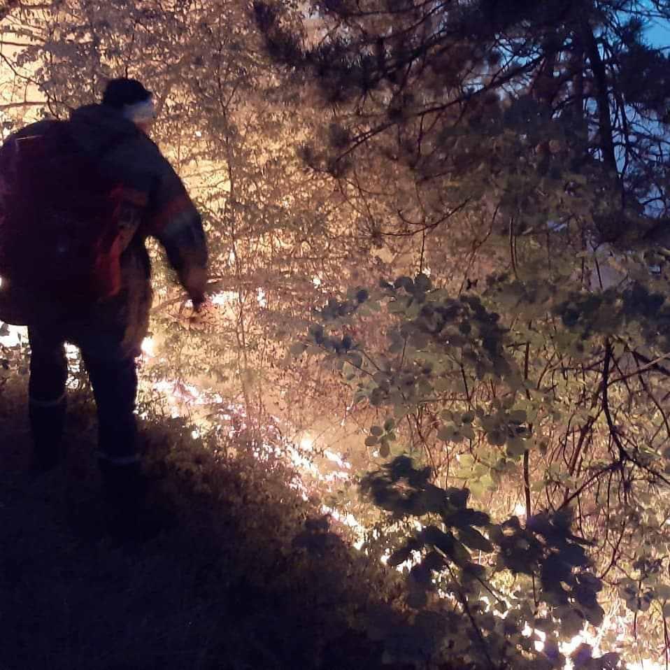 В Новороссийске всю ночь тушили лес: эвакуировали целую улицу