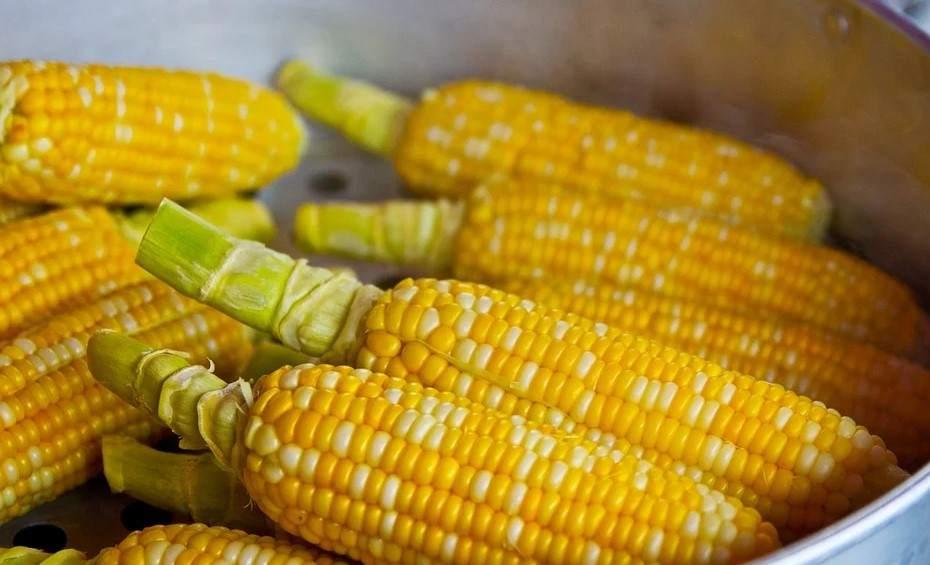 Сезон кукурузы заканчивается. Но только вареный початок может быть полезен?