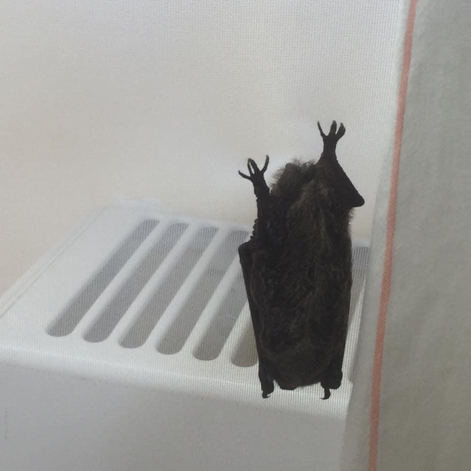 В Новороссийске летучие мыши стали забираться в жилье. Что происходит?