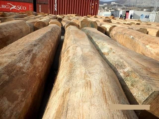Через Новороссийск в Китай везли контрабандный лес