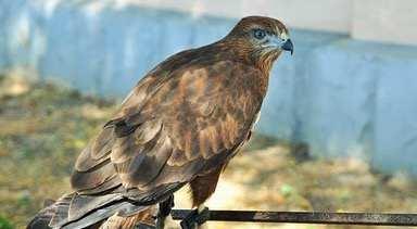 Сегодня на Кубани спасли сразу трех редких животных