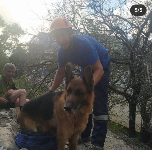 Новороссийские спасатели достали овчарку из глубокого канализационного люка
