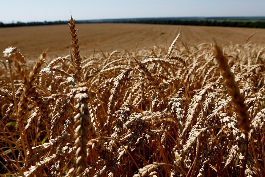 Москва в рейтинге стоит за Краснодарским краем по эффективности развития агропромышленного комплекса