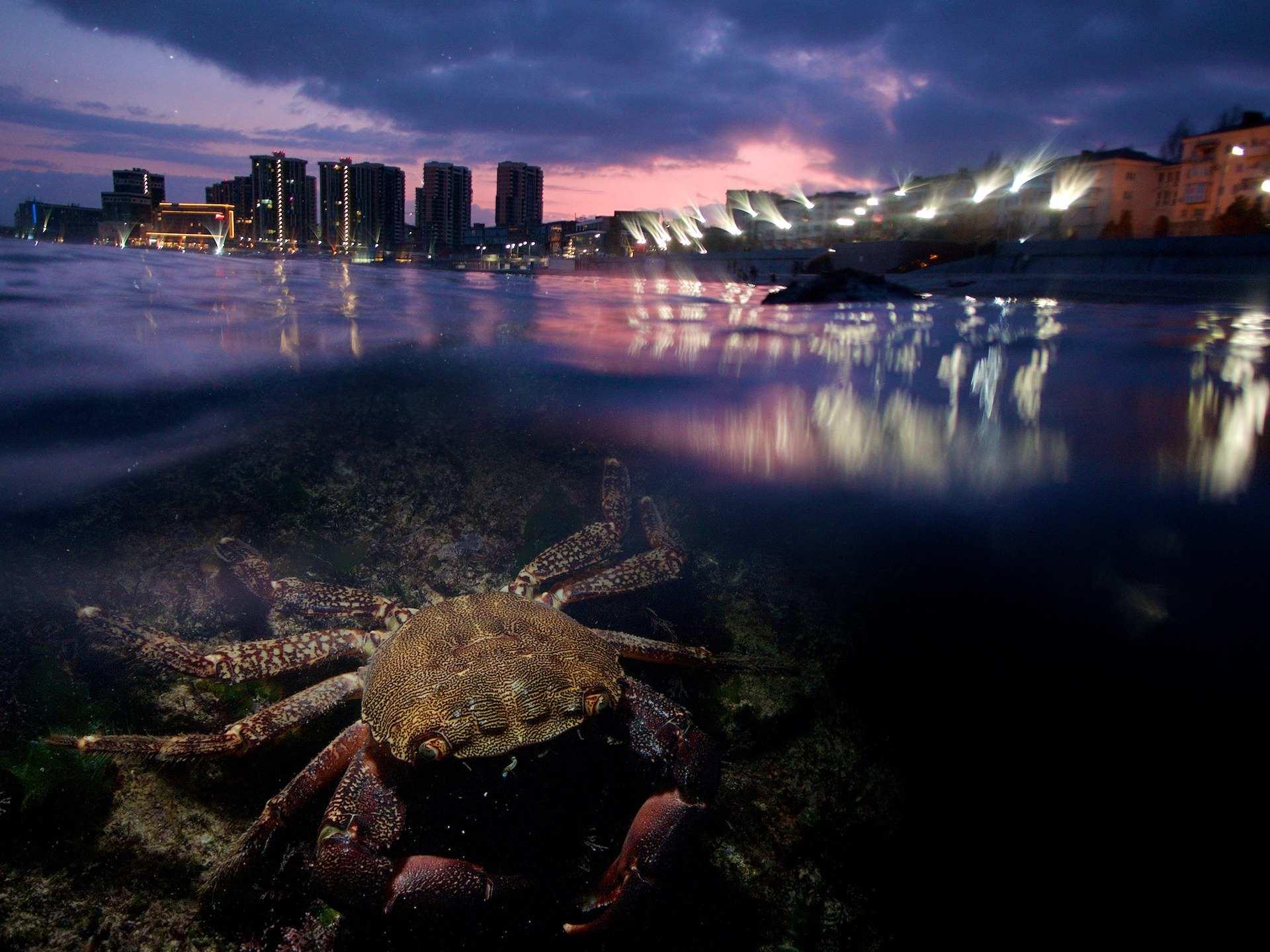 Фотограф из Новороссийска снял «городские джунгли» Цемесской бухты и отправился на Тихий океан