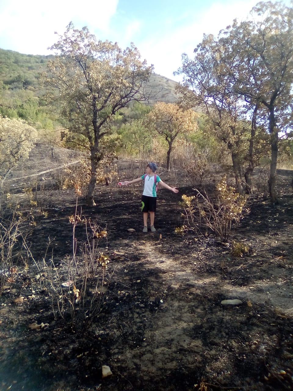 В Новороссийске лес, уничтоженный пожаром, посадят заново