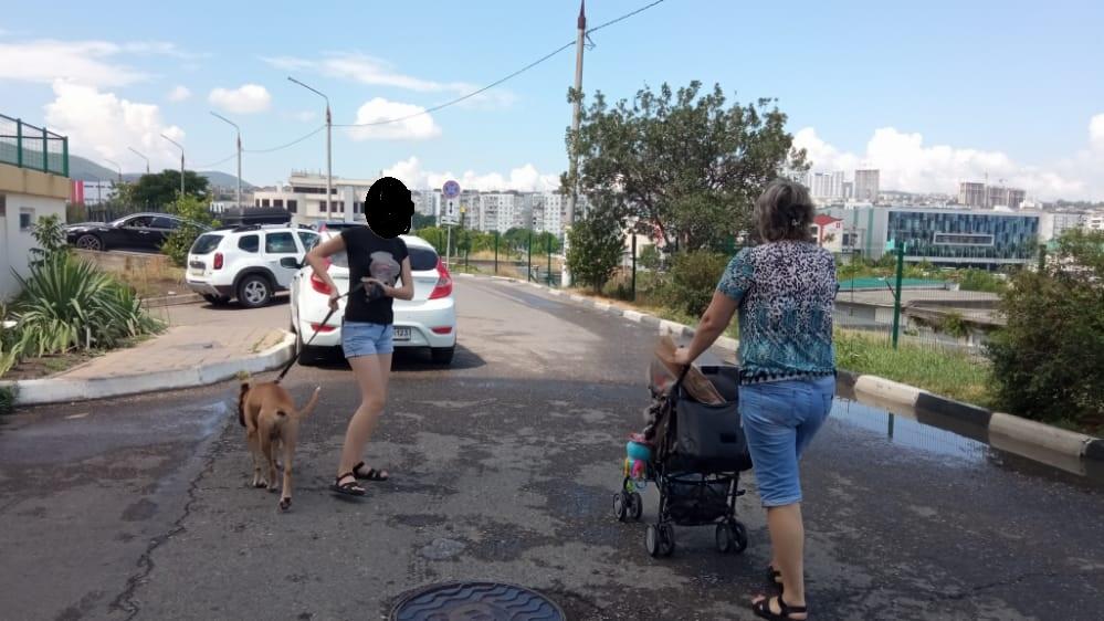 В Новороссийске бойцовская собака загрызла котенка на глазах у прохожих