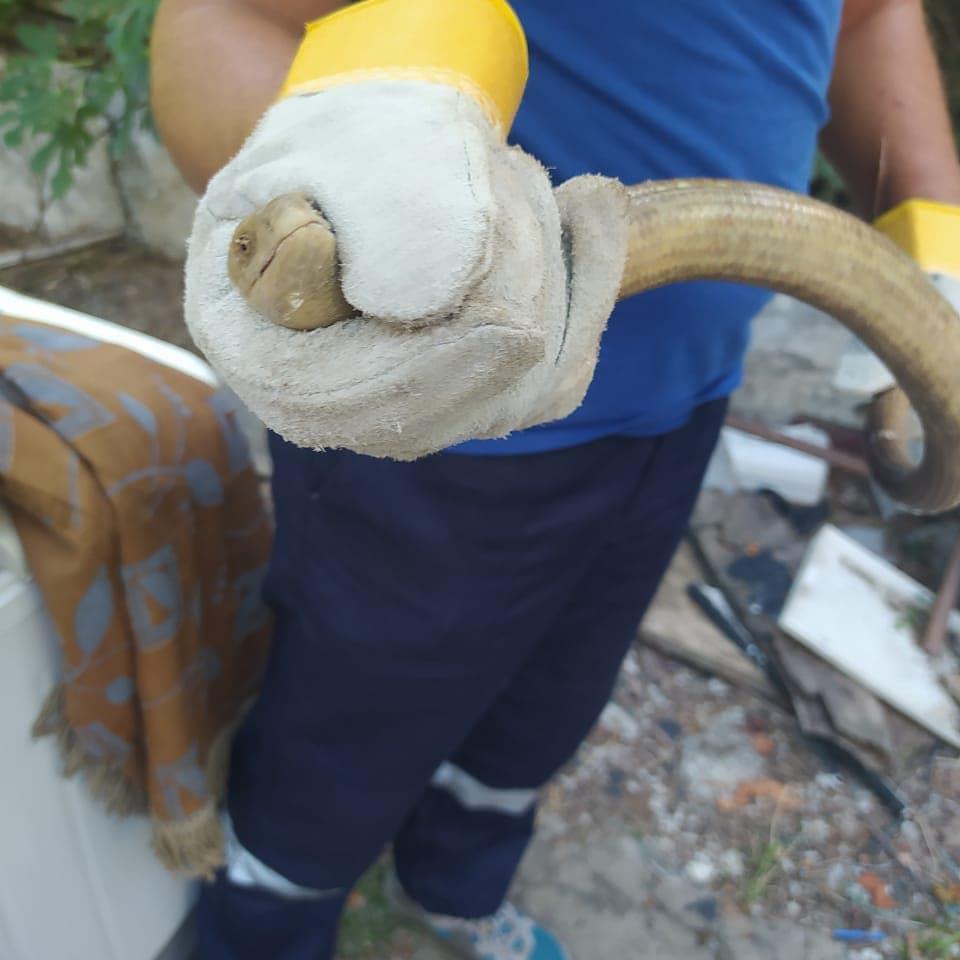 В Новороссийске появились первые змеи. Заползают прямо в дома. Начало нашествия?