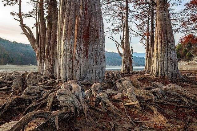 Уникальное кипарисовое озеро под Анапой закрыли для туристов