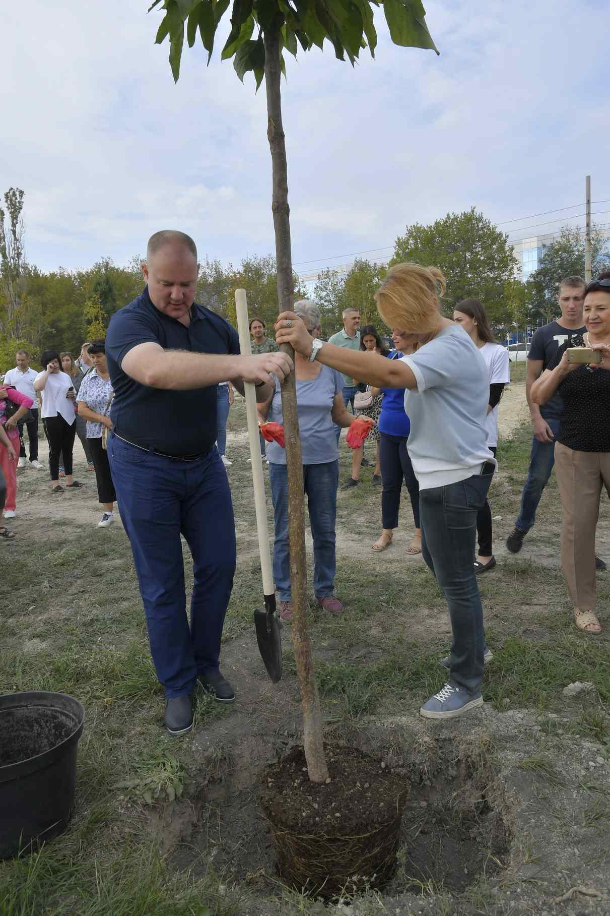 Новороссийцам предлагают посадить семейное дерево и принять участие в восстановлении леса