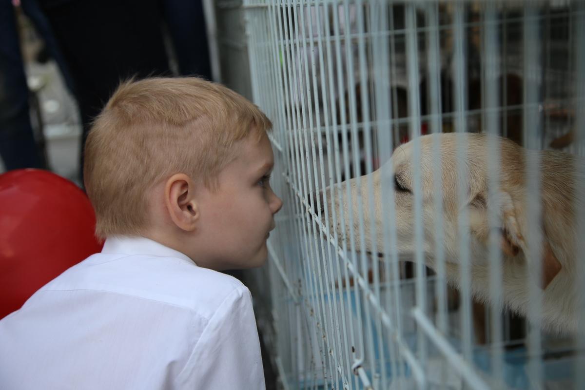 Волонтеры, помогающие животным, ждут понимания от новороссийцев