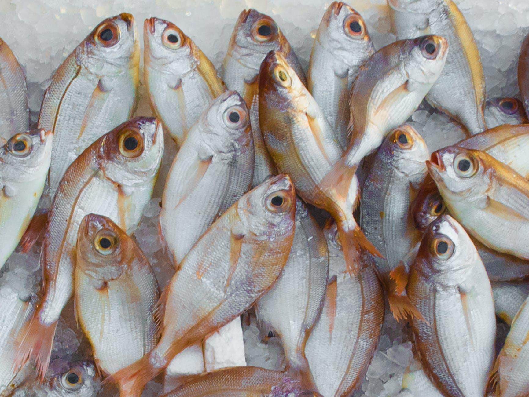 В Новороссийске придумали делать пакеты из рыбьей чешуи!