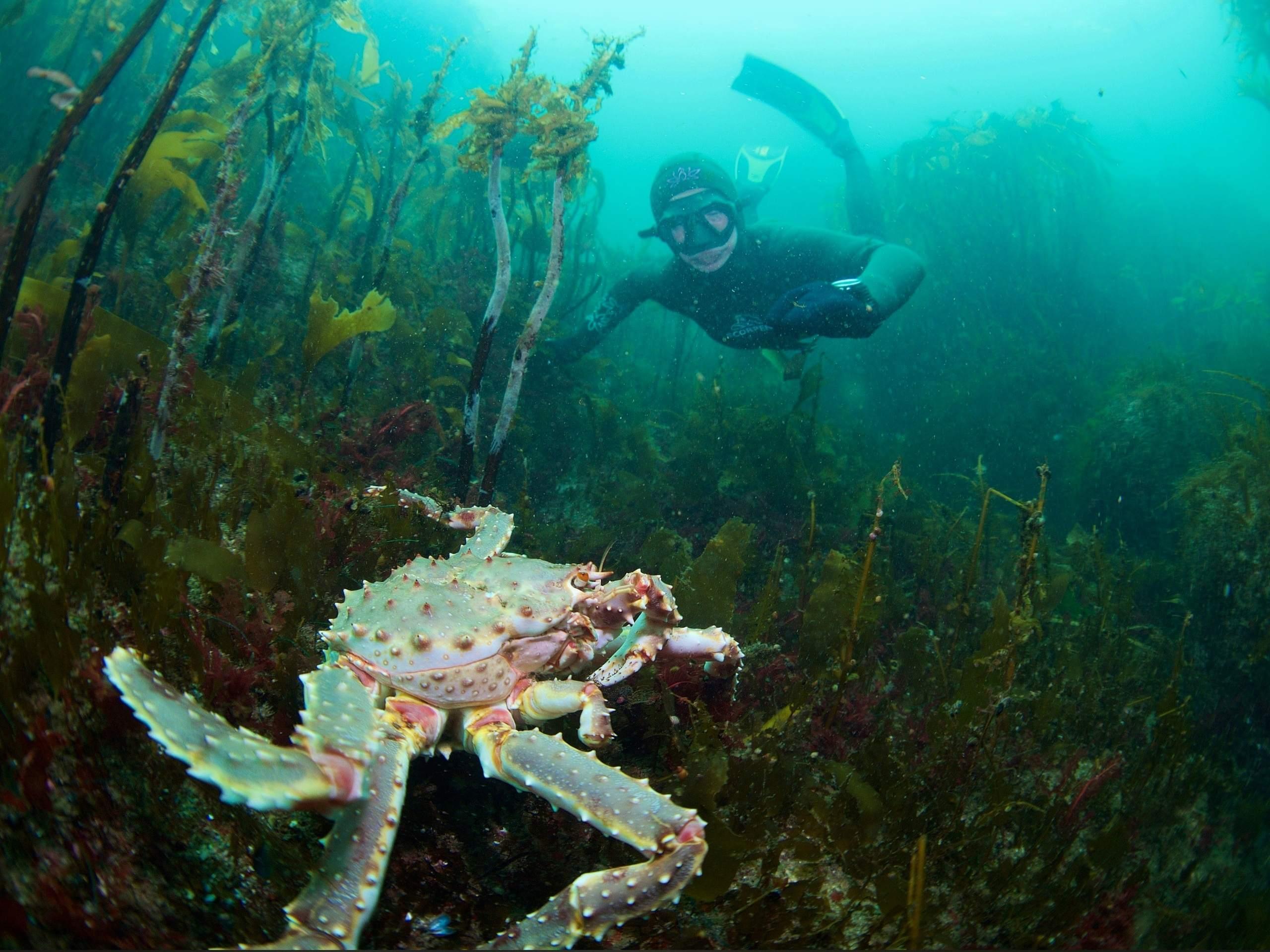 Новороссийский фотограф Егор Никифоров «ловил» крабов в Баренцевом море