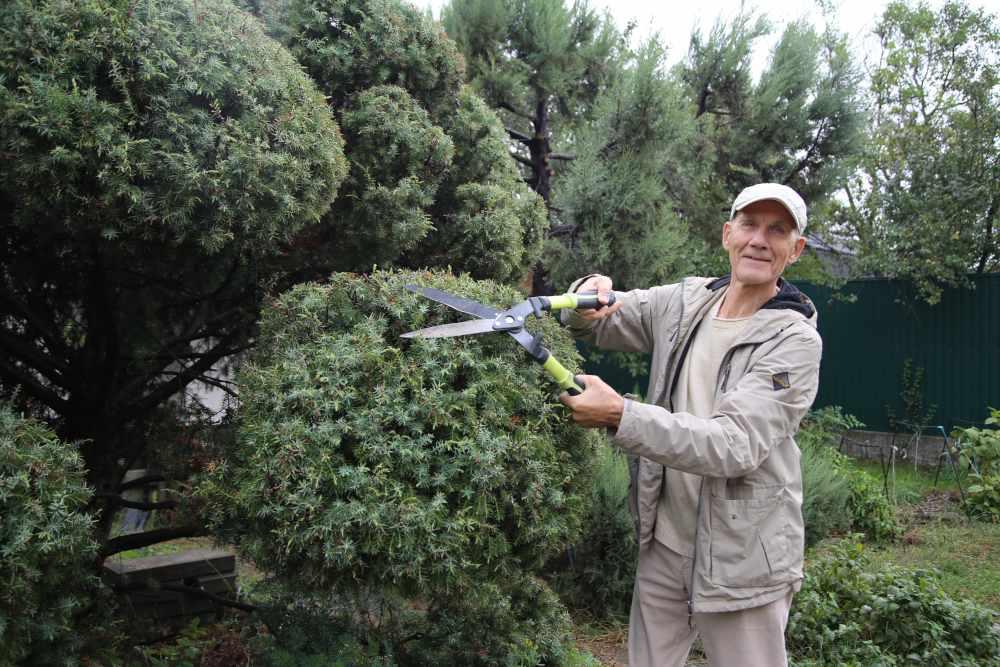 Как создать красивый топиарий: советы опытного садовода о выборе дерева, формы и инструмента