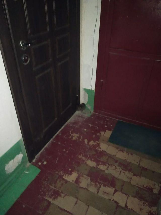 В Новороссийске крысы из мусоропровода забегают в квартиры
