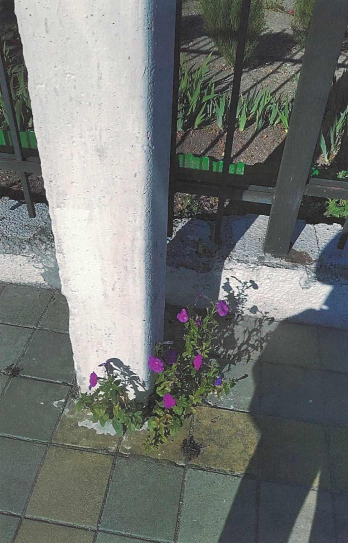 В Новороссийске зацвел … столб