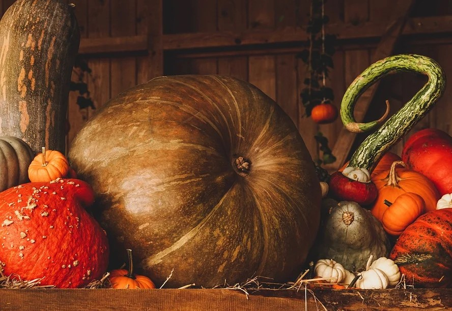 Как собрать 150 кг тыквы с одного квадрата: советы огородников