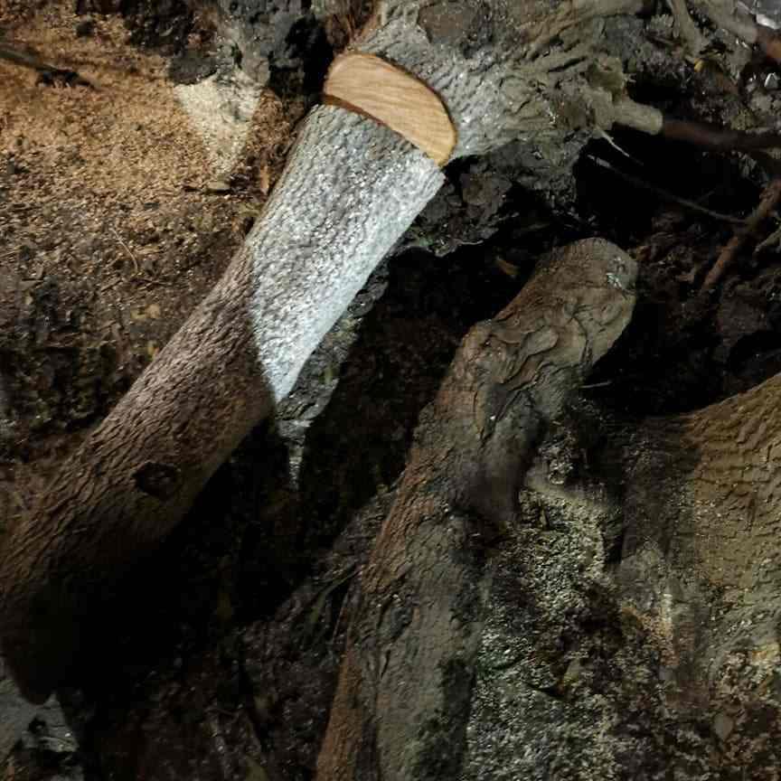 Вдоль трассы в Новороссийске срубили 126 деревьев. Виновного накажут?