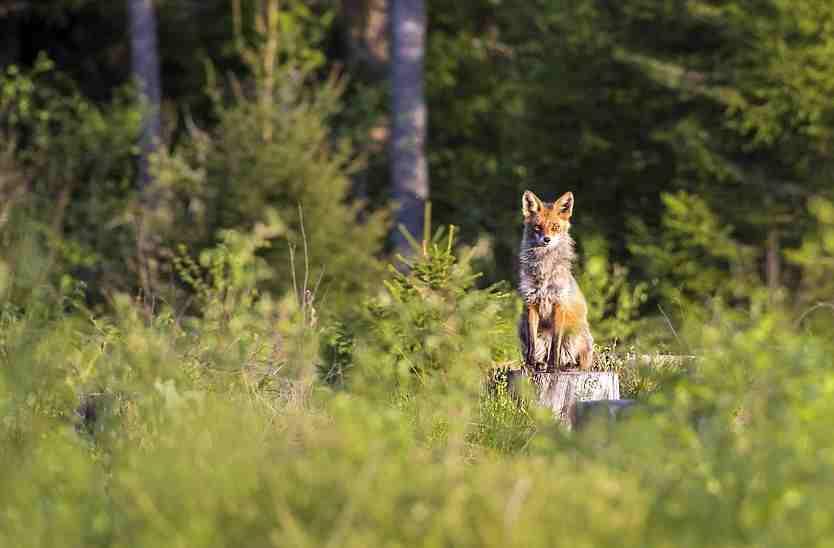 Под Новороссийском началась охота на зверя. Грибников просят  не ходить по лесу, чтобы не попасть под пулю